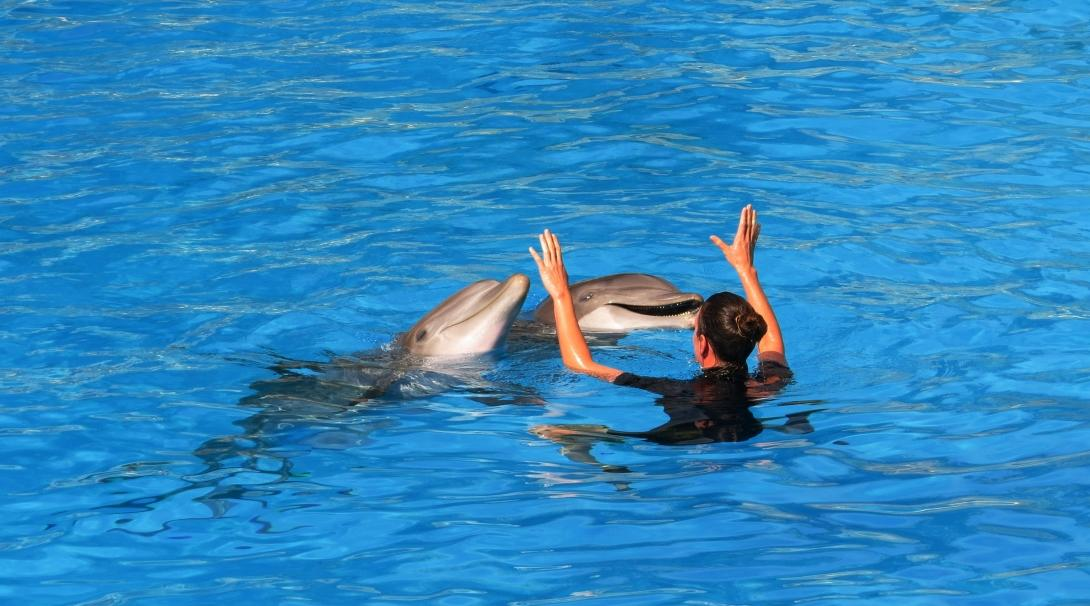 A dolphin trainer teaches dolphins tricks at an aquarium